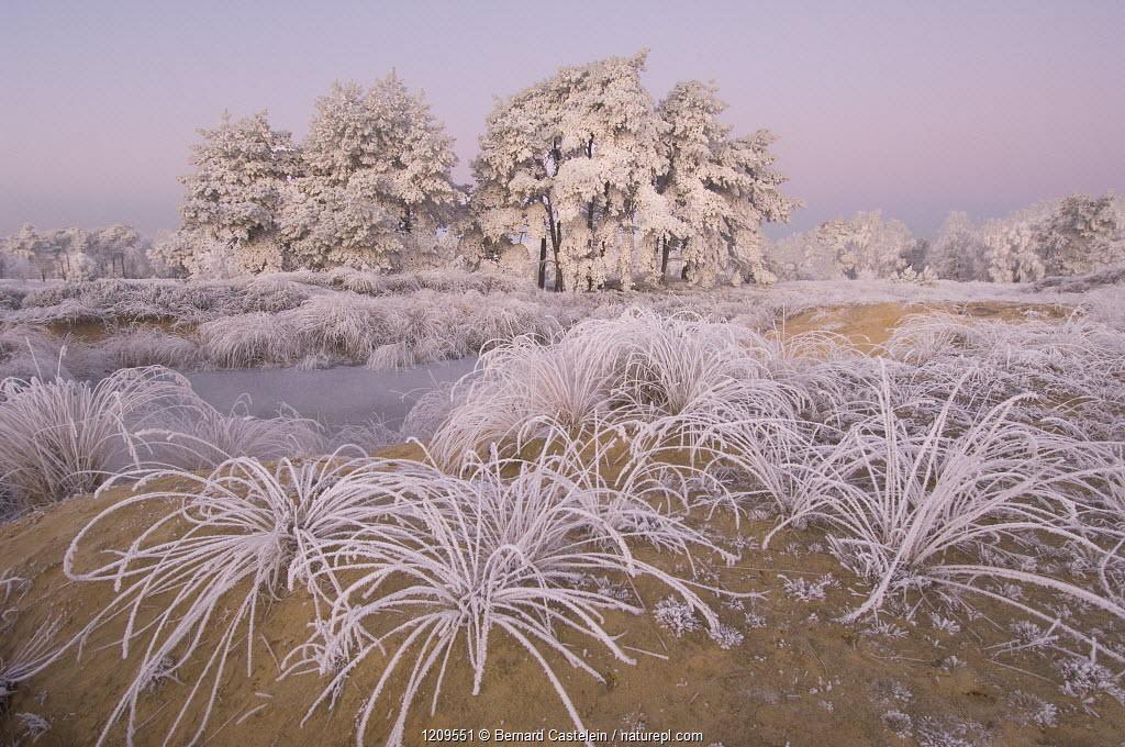 Trees and grass covered in heavy hoar frost, Groot Schietveld, Wuustwezel, Belgium