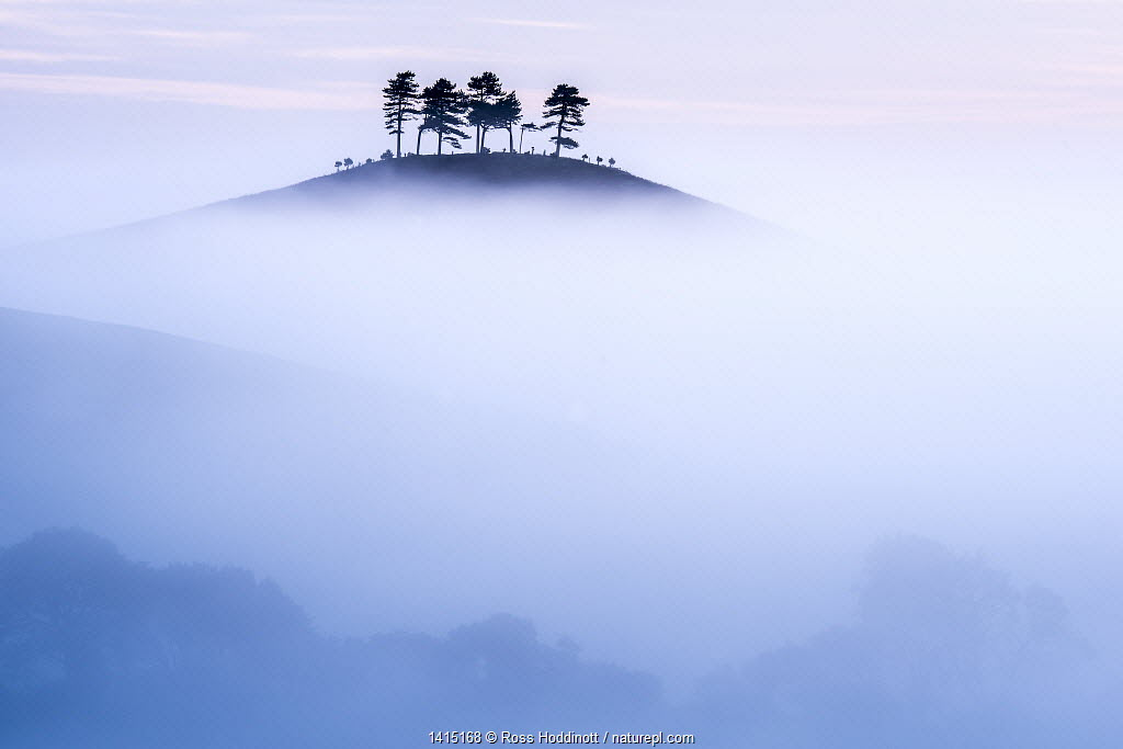 Colmers Hill in morning mist, near Bridport, Dorset, UK