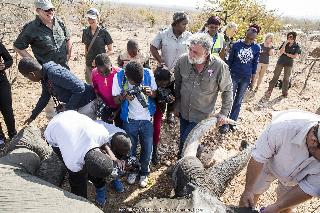 Wild Shots Outreach students from Maseke and Mabine Primary Schools photograph an African elephant (Loxodonta africana) recollaring operation supervised by vet Cobus Raath. Greater Kruger National Park, South Africa, August 2016.