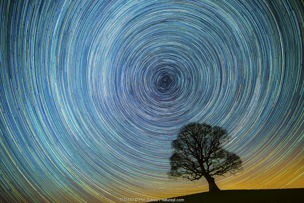 English oak tree (Quercus robur) at night silhouetted against circle of star trails, Brecon Beacons, Wales