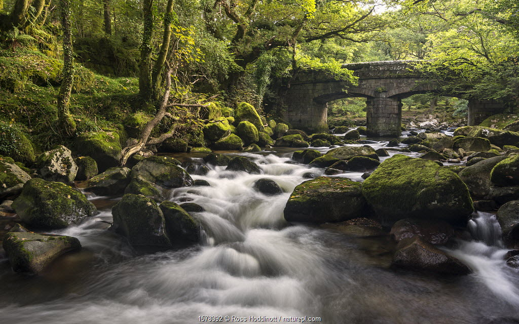 Shaugh Prior, bridge and River Plym, Dartmoor National Park, Devon, UK