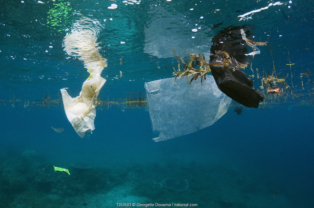 Plastic bag and disposable nappy floating at the surface of the sea. Bunaken National Park, North Sulawesi, Indonesia.