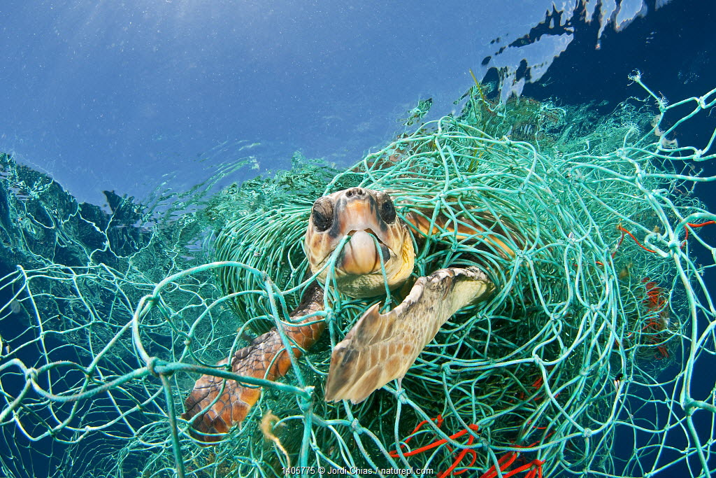 Loggerhead turtle (Caretta caretta) trapped in a drifting abandoned net, Mediterranean Sea. (Winner of the One Earth Award, WPY Competition 2010 )