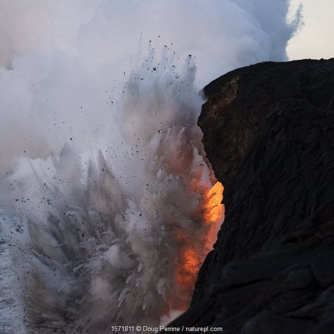 An unauthorized hiker in a restricted zone venturing out onto an unstable sea cliff over a lava tube where hot lava from the 61G flow from Kilauea Volcano enters the ocean from the open end of a lava tube, just as a violent steam explosion throws hot pumice rocks back onto the sea cliff, at the Kamokuna entry in Hawaii Volcanoes National Park, Puna, Hawaii. January 2017.