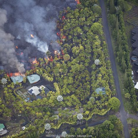 Lava originating from Kilauea Volcano, erupting from fissure 8, near Pahoa, flowing through lower Puna into Kapoho, destroying agricultural properties and burning trees, streets, and structures, Hawaii. June 2018.