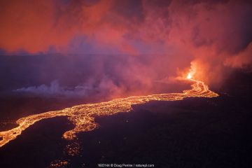 Lava originating from Kilauea Volcano, erupting from fissure 8, near Pahoa flowing in a river of lava toward, Kapoho, Puna District, Hawaii. June 2018.