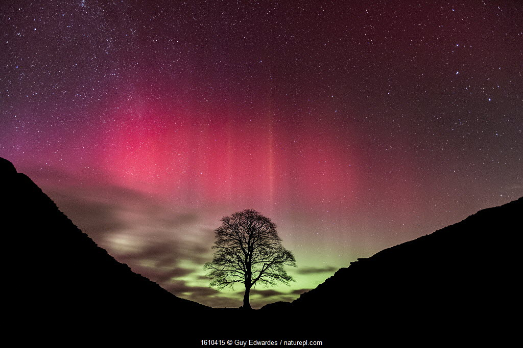Aurora Borealis over Sycamore Gap, Hadrian's Wall, Northumberland, England.