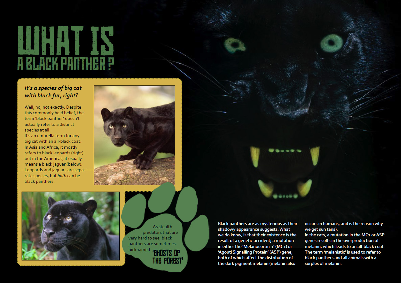 Black Panther feature story