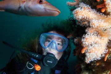 Sue Daly underwater off the coast of Sark with female cuckoo wrasse Labrus mixtus