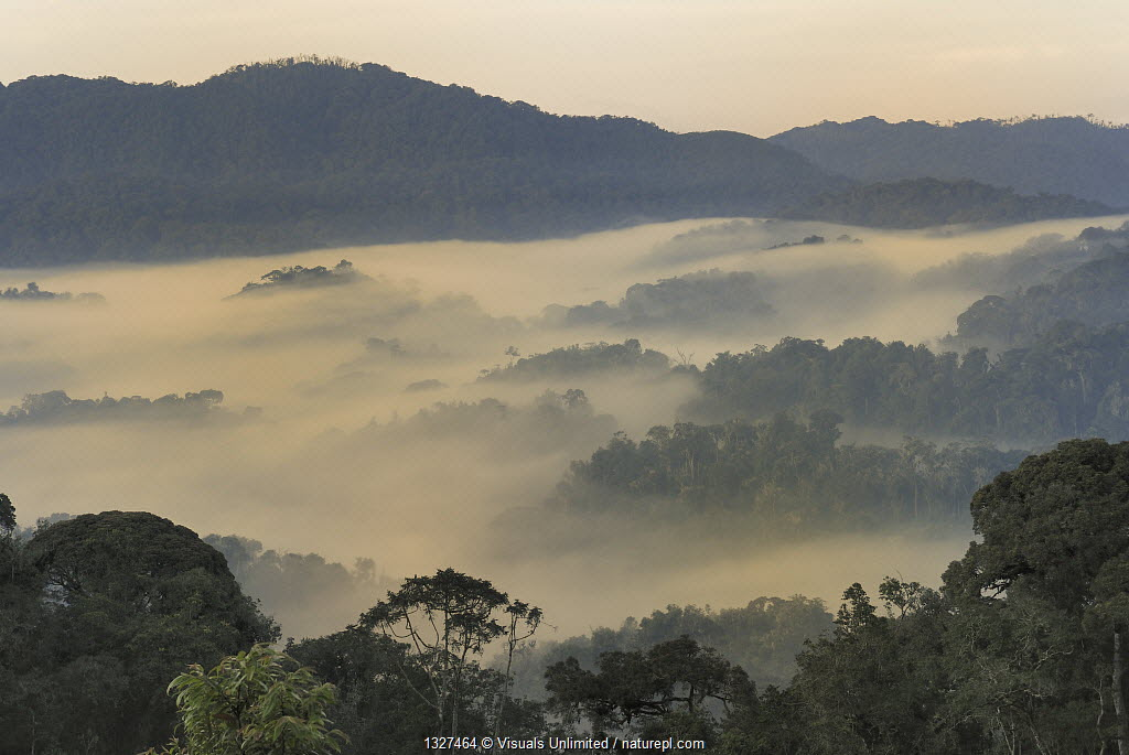 Valley fog at dawn in the mountains of the Nyungwe Forest National Park, Rwanda.