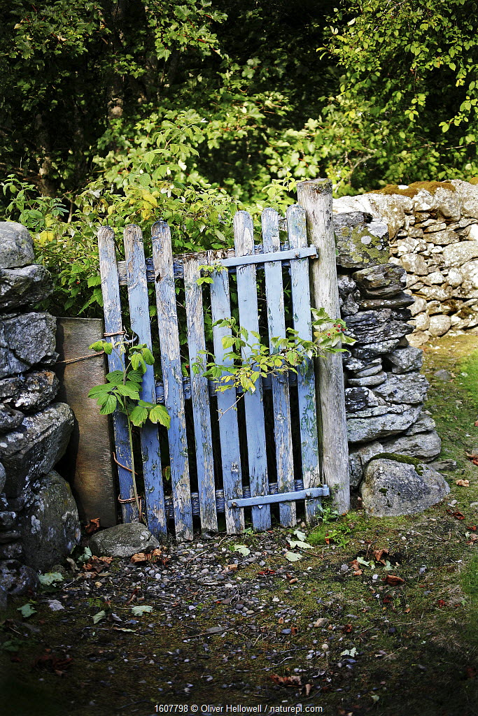 Blue gate in churchyard, Dowally Parish Church, Dunkeld, Perth and Kinross, Scotland, UK. August 2014