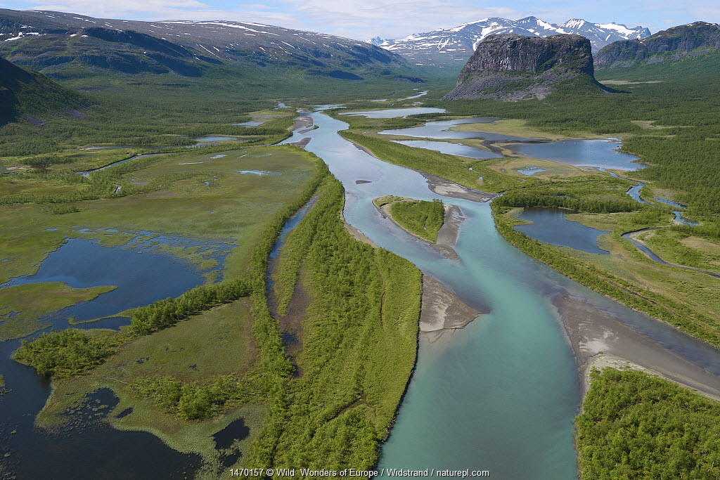 Aerial view of the Rapa river delta with distant mountains, Sarek National Park, Greater Laponia Rewilding Area, Lapland, Norrbotten, Sweden, June.