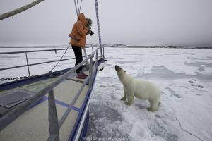 Polar bear (Ursus maritimus) approaching boat with curiosity, with photographer taking picture, Spitsbergen, Svalbard, Norway, Arctic Ocean.