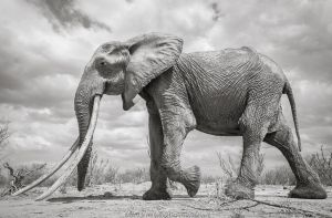 Land of Giants by Will Burrard-Lucas | Nature Picture Library