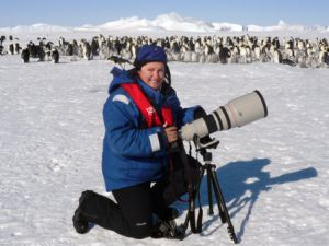 Wildlife photographer Sue Flood photographing Emperor penguins with Canon camera at Snow Hill Island rookery, Weddell Sea, Antarctica. October 2008.