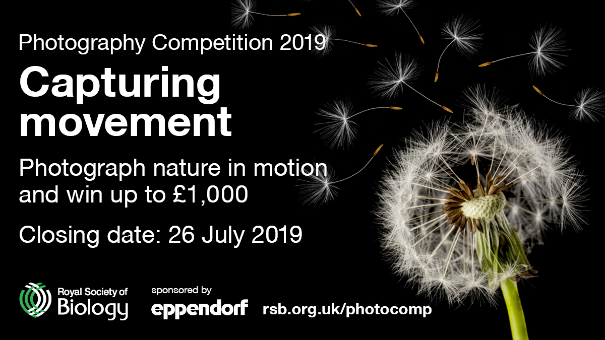 RSB Photography Competition 2019