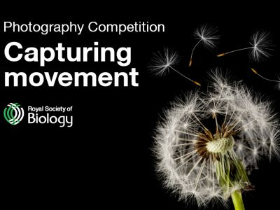 RSB Photography Competition 2019 social media card 2a