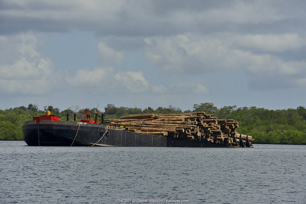 Boat loaded with timber from local forests, Siberut, Sumatra.