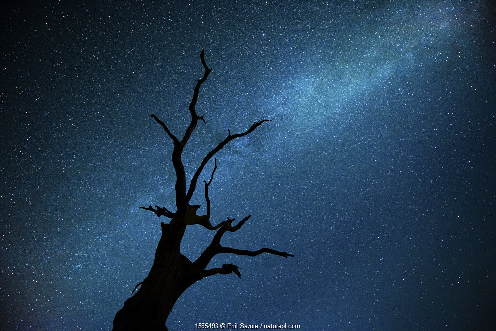 Milky way over Oak tree, Brecon Beacons National Park, Wales, UK.