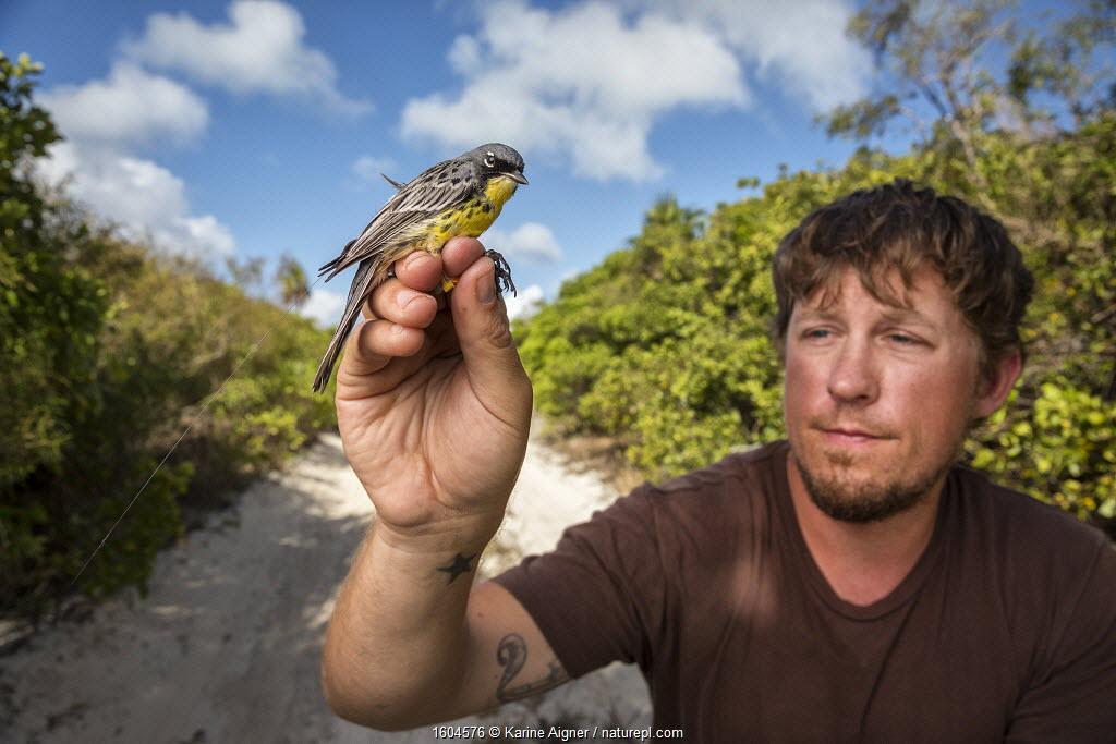 Scientist Nathan Cooper at the Smithsonian Migratory Bird Center holding Kirtland's warbler (Setophaga kirtlandii) during tagging study. CAt Island, Bahamas. April 2017.