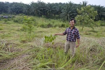 Ahmad Azhari (Coordinator for Conservation, Sumatran Orangutan Society) with Mata 'U seedling (Afzelia xylocarpa) at replanting site, for restoration of Sumatran orangutans habitat. Sei Betung Site, Gunung Leuser National Park, Sumatra, Indonesia.