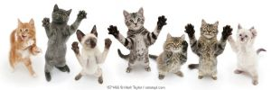 Seven cats standing on back legs, front paws raised. Digital composite