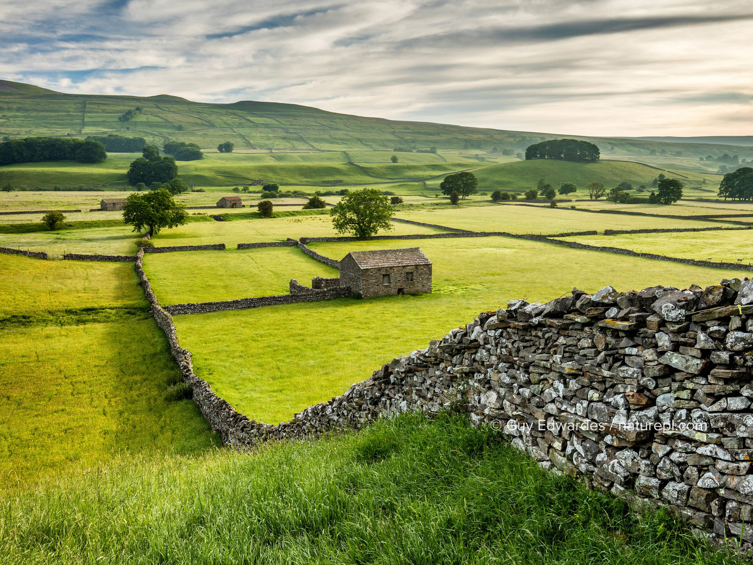 Dry-stone walls and barns in Wensleydale, Yorkshire Dales National Park, North Yorkshire, England, UK, June 2016.