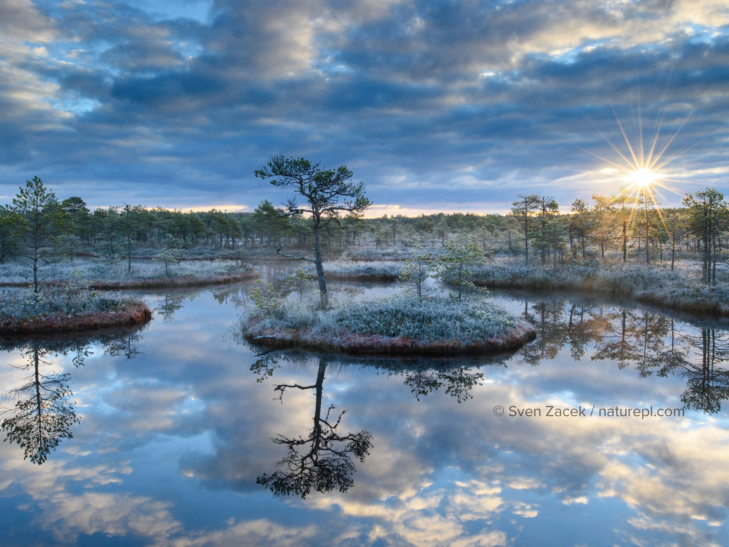 Sunrise over bog with trees reflected in pool. Endla Nature Reserve, Jogevamaa, Central Estonia. October 2015.