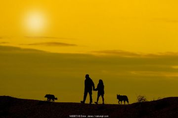 Dog walkers silhouetted against yellow sky. Cley bank, Norfolk, September.