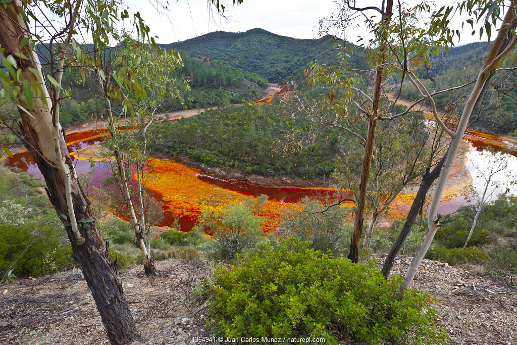 Red waters of the Rio Tinto, coloured by dissolved minerals, primarily iron. Andalusia, Spain, December 2011.