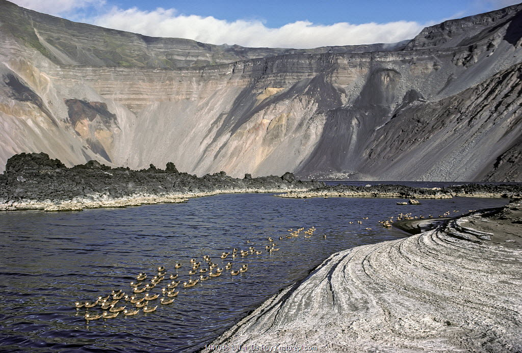 Mineral lake with White-cheeked pintails (Anas bahamensis) on volcanic caldera,