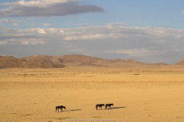 Wild horses, Aus, Namibia, February 2017.