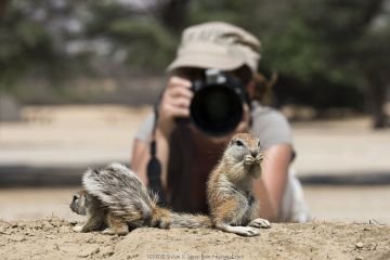 Ann Toon photographing Cape ground squirrels (Xerus inauris) Kgalagadi Transfrontier Park, South Africa.