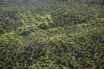Aerial image of Dehesa forest, Salamanca Region, Castilla y Leon, Spain.