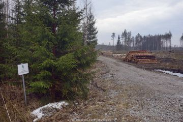 Felled trees stacked beside forestry track through mixed forest. A few metres outside protected limits of Muraka Forest Reserve, a remaining habitat of Siberian flying squirrel (Pteromys volans). Estonia.