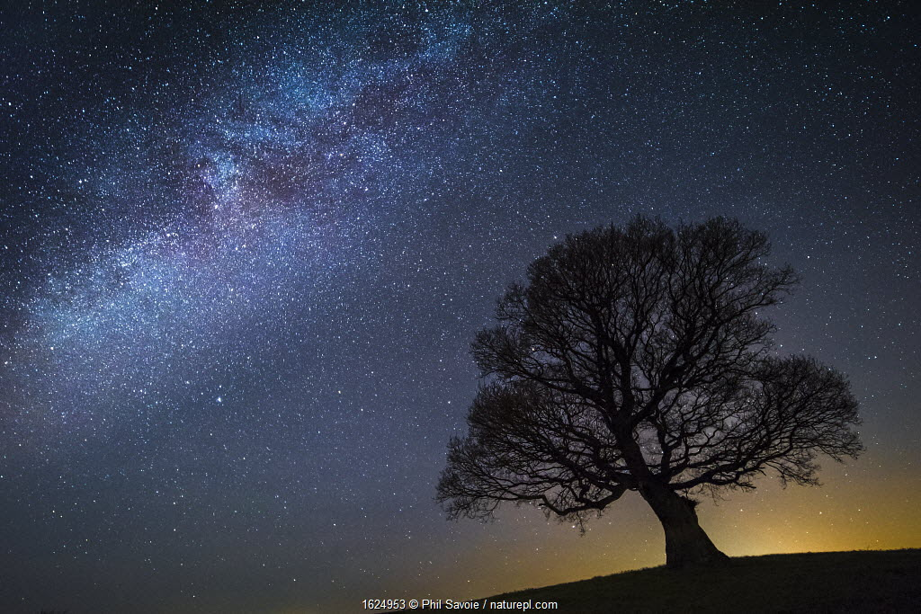 Milky Way in night sky with silhouette of tree, Brecon Beacons National Park,an International Dark Sky Preserve, Wales, UK. December 2016.