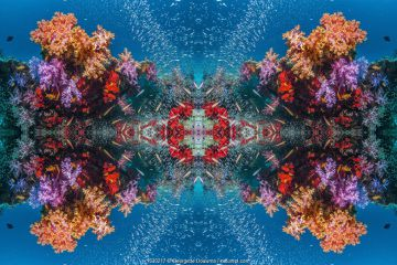 Kaleidoscopic image of soft corals (Dendronephthya sp.), Andaman Sea, Thailand.