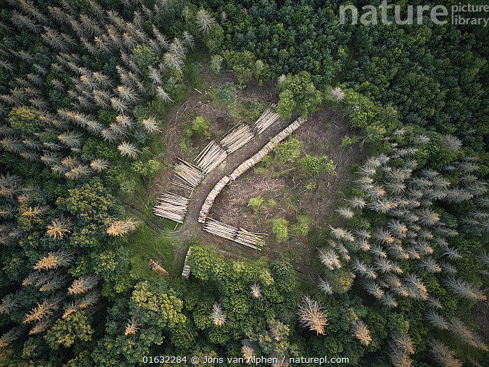 Aerial view of clearing with felled logs in Bialowieza Forest UNESCO World Heritage Site, Poland. Highly commended in the Wildlife Photojournalism Category of the Wildlife Photographer of the Year Awards 2019.