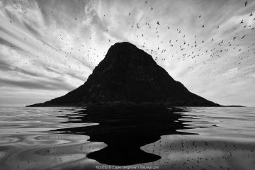 Silhouette of birds flying around Birskoy Bird cliff, Andoya, Norway. August. Second place in the Bird Category of the GDT European Wildlife Photographer of the Year Awards competition 2019