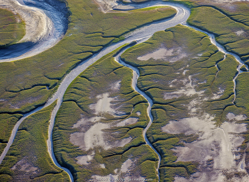 Patterns in the tidal flats of the delta where the delta is swept by tidal encroachment from the Gulf of California. Colorado River Delta, Baja California, Mexico.