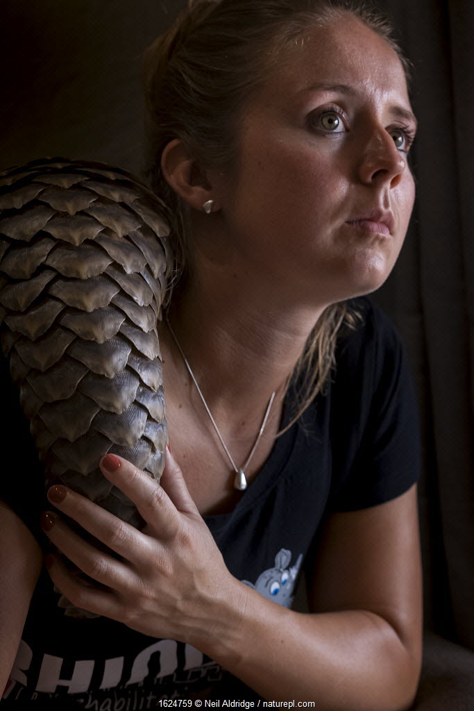 Young orphaned Temminck's ground pangolin (Smutsia temminckii) rests on the shoulder of vet and pangolin foster mother Jade Aldridge at the Rhino Revolution rehabilitation facility in South Africa.