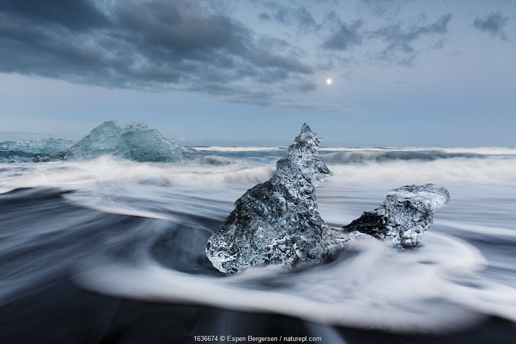 Ice sculptures on black beach. Jokulsarlon Glacier, Iceland 2016
