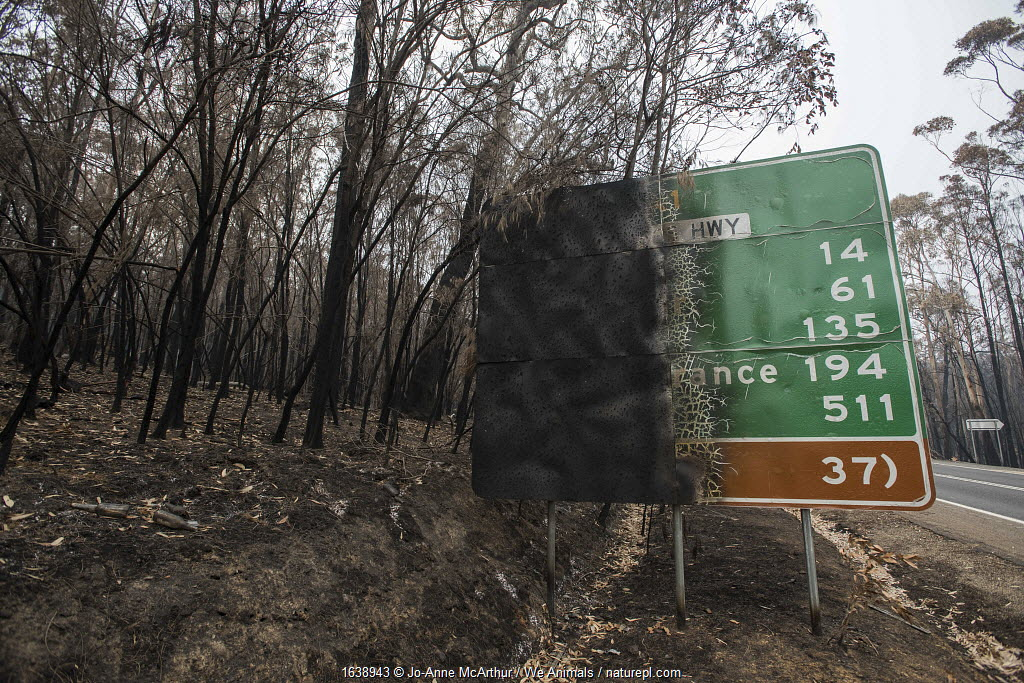 Burned forest and road sign in Mallacoota, Australia. This area was devastated by the bushfire a month before this image was taken, leaving much of the native wildlife suffering from traumatic injuries and at risk of starvation due to loss of habitat. January 2020.