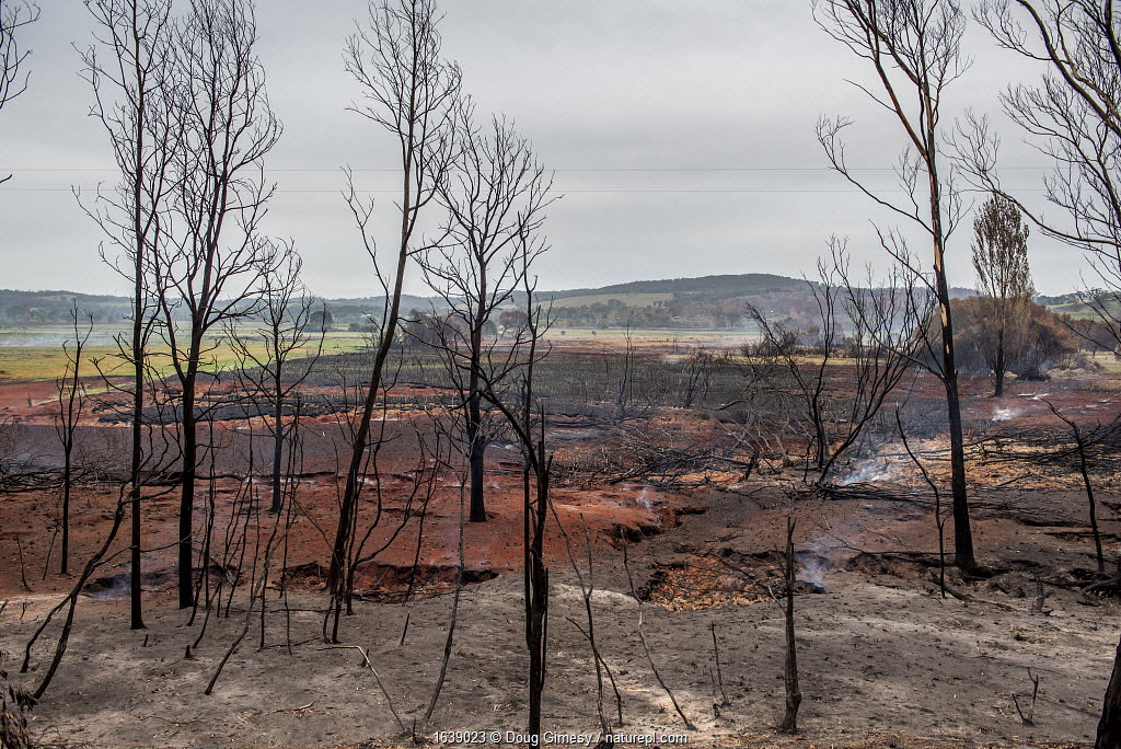 The smoke from underground peat continuing to burn rises into the air at Sarsfield, days after bushfires destroyed much of the town and native habitat. Sarsfield, Victoria, Australia. January, 2020