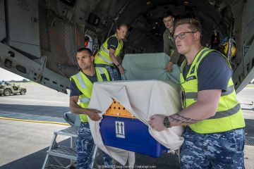 Royal Australian Airforce crew carry a crate which contains a koala off a Royal Australian Airforce (RAAF) C-27J Spartan. This plane was used to transport six koalas (Phascolarctos cinereus) evacuated from the Mallacoota wildlife triage centre to Melbourne for further treatment by Zoos Victoria veterinarian staff. They were treated for burns that were the result of bushfires in the area. East Sale RAAF Base, Sale, Victoria, Australia.? January, 2020. Editorial use only.?
