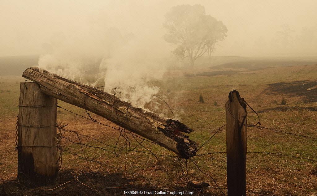 Farmland in the wake of a bushfire near Cobargo, New South Wales, Australia. January 2020.