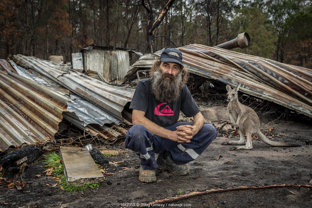 Joseph Henderson, one of the founders and managers of Wallabia Wildlife Shelter, in front of the burnt remains of his house, which was destroyed (along with the animal enclosures) during the 2019/20 bushfires. In the background is a male eastern grey kangaroo (called 'Link'), one of the animals evacuated befoe the fire. Josepth and Rena, co-owner of the shelter, returned to rebuild. Goongerah, Victoria, Australia. February 2020. Editorial use only.