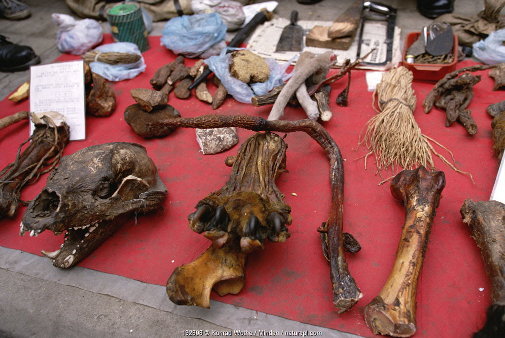 Tiger (Panthera tigris) paw and penis as a potency remedy, market in Chengdu, China