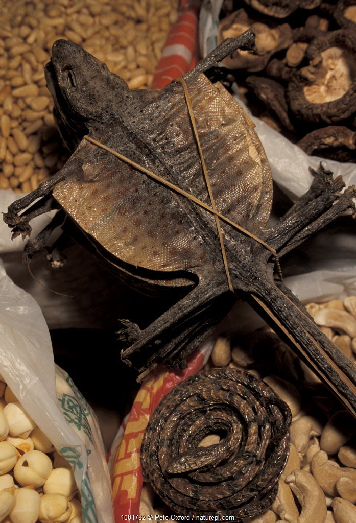 Flying lizards used for medicine, Food market, Xian, Shaanxi province, China