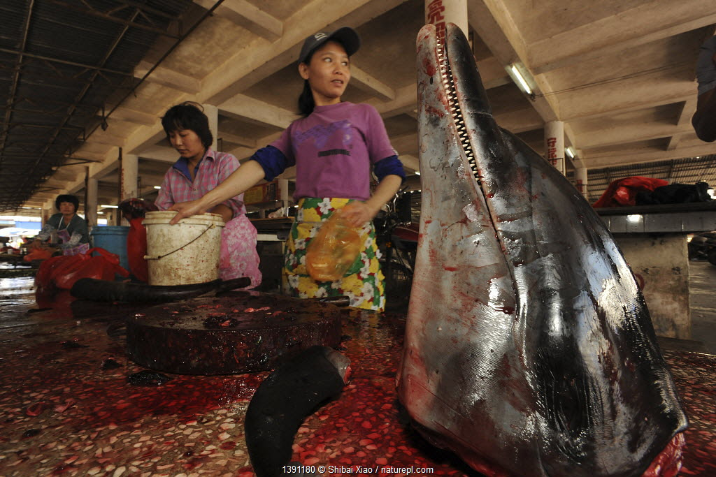 People selling a dolphin meat at a country market, head on display, Hainan Island, China, April 2012.